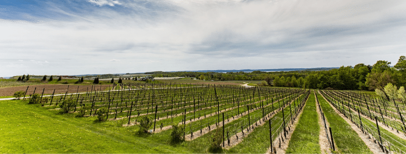 Traverse City Winery Vineyard